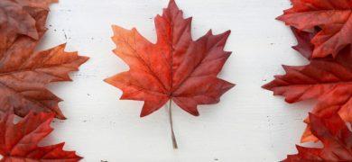 Visa AVE pour un séjour linguistique au Canada
